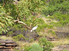 Bird Watching In Kakadu