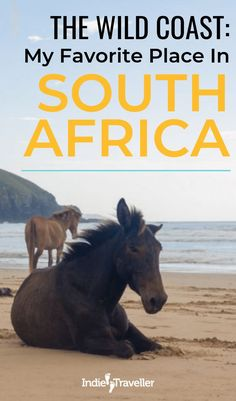 South Africa Best Destinations: Learn why Coffee Bay in South Africa is such a great place to visit, and find out about the Xhosa village tours, hikes to the Hole in the Wall, and more. Travel Around The World, In This World, Village Tours, Tourism Poster, Africa Travel, Amazing Destinations, Solo Travel, Vacation Spots, South Africa