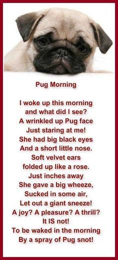 Pug poetry