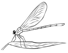 Dragonfly Coloring Book Pages Kids Coloring Pages Pinterest