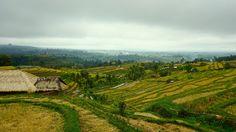 Rice Paddy Field Bali Indonesia [OC] 6000  3376]