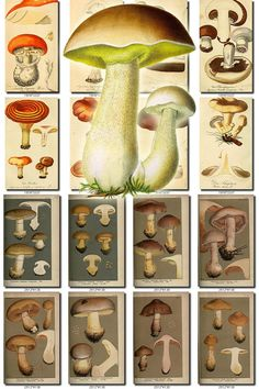 MUSHROOMS-14 Collection of 173 vintage images High resolution digital download printable illustrations 300 dpi boletus micology plates           data-share-from=listing        >           <span class=etsy-icon