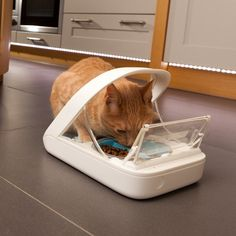 SureFlap Surefeed Microchip Pet Feeder MPF001 - Uses Microchip or Collar Tag  - eOutletDeals