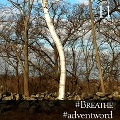 #AdventWord #Breathe || The offer of Christ's peace is meant to be a gift. And so our prayer for this peace is a prayer of reception. That we have the grace to receive this peace. To take it in, as regularly and necessarily as we breathe.          Br. Curtis Almquist || @SSJEWord: We hope that you will post prayerful images with the #adventword hashtag on Twitter, Facebook and Instagram to create a Global Advent Calendar. Check out www.aco.org/adventword.cfm & see what others are posting.