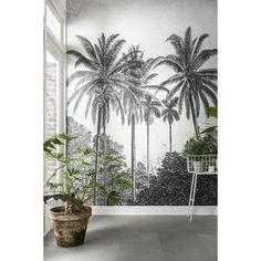 Fotobehang palmen (dessin 89434) kopen? Verfraai je huis & tuin met Fotobehang van KARWEI