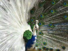 Natures wonder! Stunning.