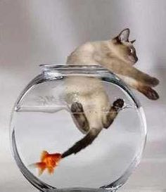 In life, sometimes you're the goldfish, sometimes you're the cat. lol