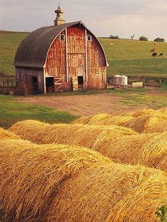 Barn & Hay Bales I♡Country life ✿ Vida en el campo ✿ Country Barns, Country Life, Country Living, Country Roads, Farm Barn, Old Farm, Barn Pictures, Barns Sheds, Hay Bales
