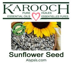 Sunflower is native to America. The plant grows to a height of about 6 – 15 feet. Good for all skin types. The carrier/base oil is used to dilute essential oils in aromatherapy for massage oils and other formulations. Diluting Essential Oils, Bottle Sizes, Carrier Oils, Sunflower Seeds, Massage Oil, Organic Oil, Seed Oil, Pure Products, Aromatherapy