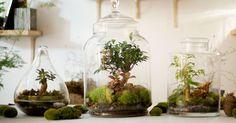 Vous aimez les plantesmais malheureusement, vous n'avez pas la main verte ? Alors le concept innovant du magasin parisien Green Factory est fait pour vous ! En plus de proposer des plantes sous une forme originale, il s'avère que celles-ci ne nécessitent que très peu d'...