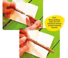 A gardener's guide to grafting