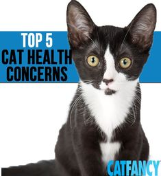 Prepare for and prevent these top cat illnesses, as reported by a pet health insurance company.
