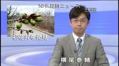 Petal Tip Protruding From Sakura Bud Sends Japan Into Hysterics