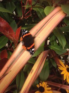 @JoYule2 - #SensationalButterflies @NHM_London this butterfly we saw in Great Yarmouth