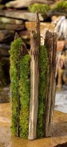 whole web page on growing moss.  I need to look into this.  It might be very cool.