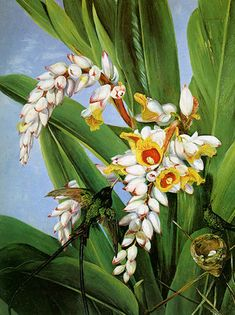 Flowers fruit Asia Sun, Marianne North