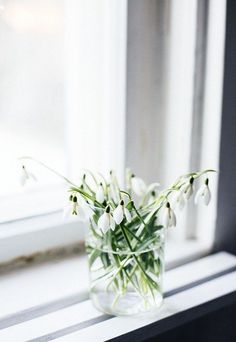 Snowdrops | Tips for adding new-year freshness to your home | These Four Walls blog