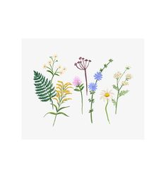 Rifle Paper Co. - Wildflowers - Illustrated Art Print