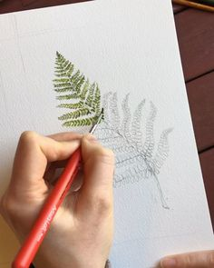 Video of a botanical watercolor fern painting . Video of a botanical painting of the watercolor fern # Houseplants Plant Drawing, Painting & Drawing, Drawing Flowers, Painting Flowers, Tulip Drawing, Plant Painting, Drawing Drawing, Watercolor Plants, Watercolor Paintings