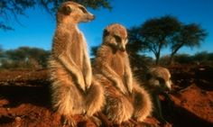 10 Top places for wildlife viewing