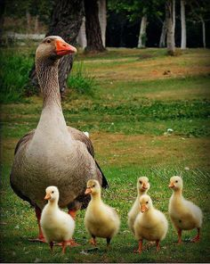 Being a mother means that your heart is no longer yours; it wanders wherever your children do. ~♥~