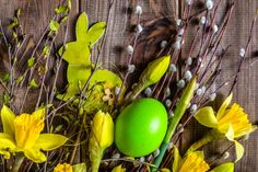 background with easter eggs rabbit and daffodils spring symbol