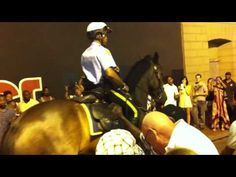Police Horse Shows Off Some Slick Dancing Moves To Mardi Gras Goers - Equine for Life   Equine for Life
