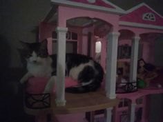My cat is sleeping in my daughters Barbie dream house and he is even in the bed! by midwesthuor cats kitten catsonweb cute adorable funny sleepy animals nature kitty cutie ca