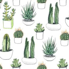 Watercolour Cacti and Succulents fabric by crumpetsandcrabsticks on Spoonflower - custom fabric