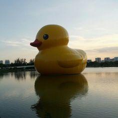 네덜란드 예술가 플로렌틴 호프만의 작품 러버덕(Rubber Duck)