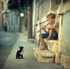 lolcuteanimals: The Pied Piper for kitties