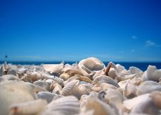Shell Beach in Western Australia is made up of millions of tiny shells which are up to 10 metres deep and stretch for over 120 kilometres. Shell Beach, Beautiful Fish, Beautiful Places, Full Hd Pictures, Australian Beach, Sanibel Island, Florida Beaches, Florida Usa, Riviera Maya