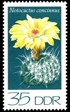 Notocactus concinnus , (Cacti) .  Germany, Democratic Republic (DDR) 1974 German Stamps, Cactus, Valley Of Flowers, Flower Stamp, You Are The World, Vintage Stamps, Mail Art, Pattern Art, Cover Art