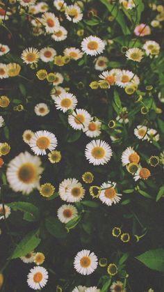 Let's pick flowers #seasonoflove #tataharper