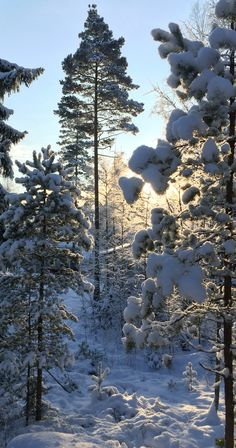 Winter season #winter #Finland
