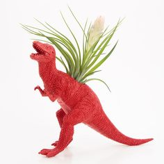 Cool 50 Air Plant for Your Kids Room Ideas https://mybabydoo.com/2017/04/07/50-air-plant-kids-room-ideas/ -In this Article You will find many Air Plant for Your Kids Room Inspiration and Ideas. Hopefully these will give you some good ideas also.
