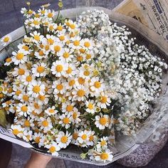 Pretty daisies and white wild flowers