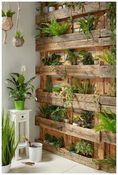 If you are looking for Diy Projects Pallet Garden Design Ideas, You come to the right place. Below are the Diy Projects Pallet Garden Design Ideas. Indoor Garden, Indoor Plants, Home And Garden, Big Garden, Balcony Garden, Wall Of Plants Indoor, Garden Plants, Gravel Garden, Garden Terrarium