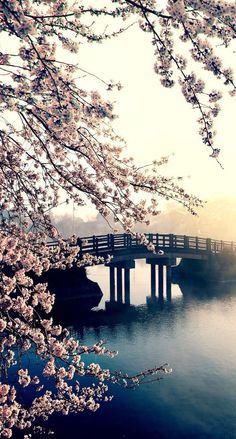 bridge across a river, blooming tree, spring images, phone background, phone wallpaper We have collected 100 spring wallpaper images to decorate your phone or desktop computer and get you into the spring mood and bring a smile to your face. Frühling Wallpaper, Spring Desktop Wallpaper, Wallpaper Fofos, Phone Screen Wallpaper, Scenery Wallpaper, Wallpaper Downloads, Wallpaper Samsung, Green Wallpaper, Travel Wallpaper