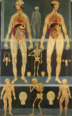 16th century Persian anatomical illustration