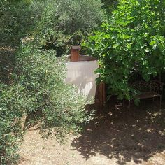 olive trees and fig trees - the perfect setting for our outdoor shower - deborah beau / kickcan & conkers