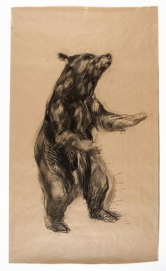 Nichola Hicks, Bear 2 2009 Charcoal on brown paper Chelsea School Of Art, Royal College Of Art, Beautiful Drawings, Life Drawing, Dog Art, Contemporary Artists, Sculptures, Gallery, Illustration