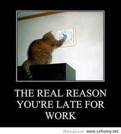 clean humor animal with captions | Funny Animal Pictures With Captions Very Cats Cute Kitty Cat