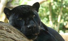 Черная красавица - Фрикции. Animals - Блоги - Sports.ru