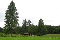 Die Raumfee: Ruhe. Weide in Rückholz, Allgäu