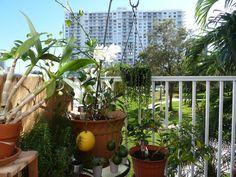 Balcony Garden 12.2011 | Flickr - Photo Sharing!