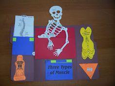 Skeletal System lapbooks