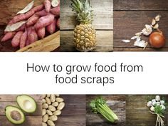 How to grow food from food scraps - Kidspot