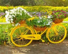 Candy colored urban bicycle at the Dubai Miracle Garden. Petunia Flower, Geranium Flower, Million Flowers, Miracle Garden, Floral Theme, The Visitors, Large Flowers, Petunias, Go Green