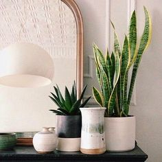 Best Air Filtering House Plants During Winter